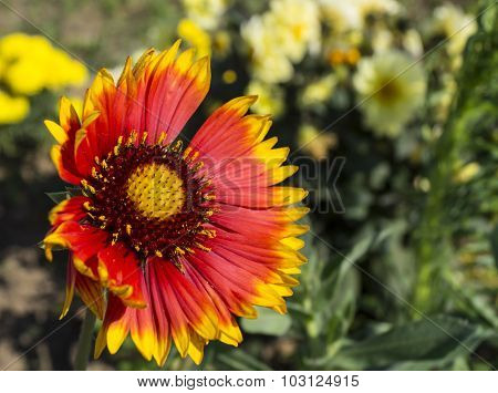 Beautiful Flowerses Grow In Garden