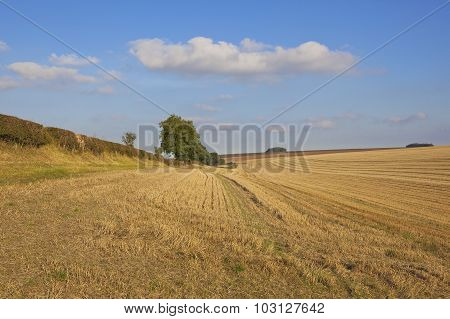 Yorkshire Wolds Harvested Wheat Field