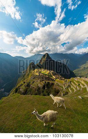 Sunlight On Machu Picchu, Peru, With Llamas