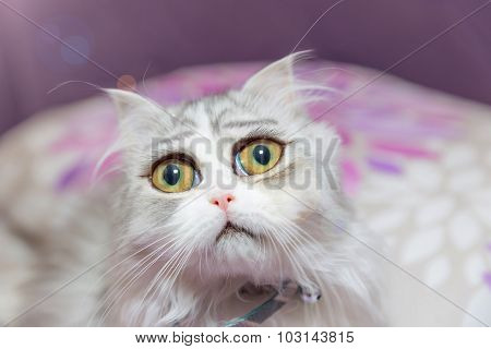 Sad Kitten With Huge Eyes