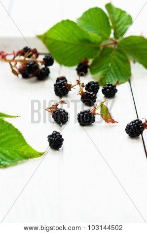 Organic Blackberry