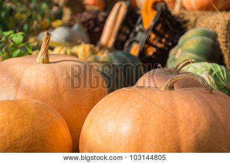 Collection Of Colorful Pumpkins In A Rustic Interior. Front Focus.