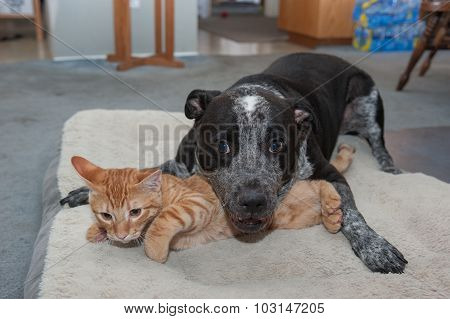 Big dog and little kitty goofing off