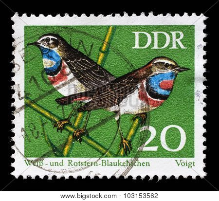 GDR-CIRCA 1973: A stamp printed in GDR shows bird Bluethroat (Luscinia svecica) from the series Protected Songbirds, circa 1973.