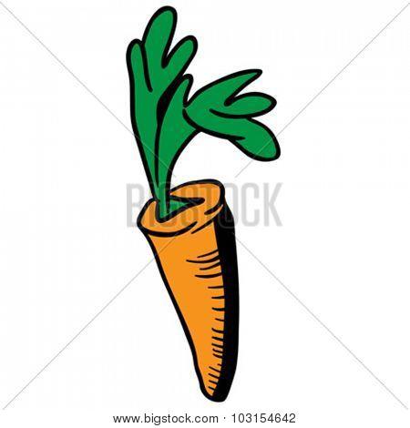 carrot cartoon illustration