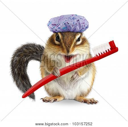 Funny Chipmunk With Toothbrush And Shower Cap, Isolated On White