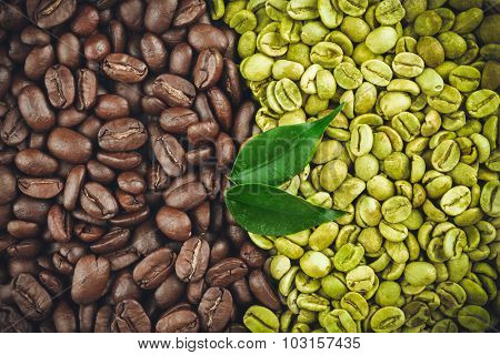 Green and brown coffee beans with leaves close up