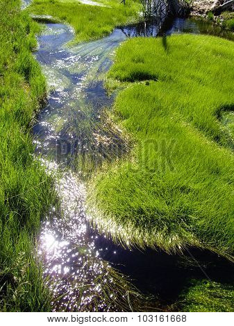 Thermal River Of Grass In Yellowstone