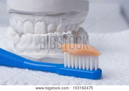 Toothbrush With Paste And Dental Gypsum