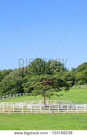 Landscape Of Horse Ranch And Single Pine Tree