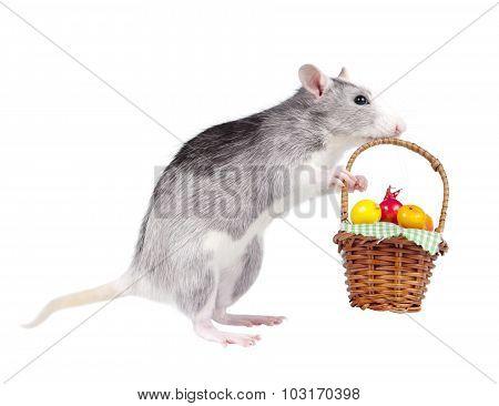 Decorative rat taking basket of fruits isolated on white background