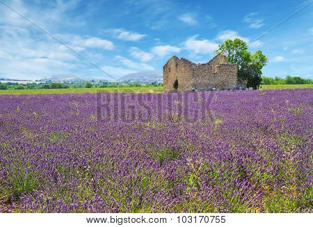 Lavender Field With Old House