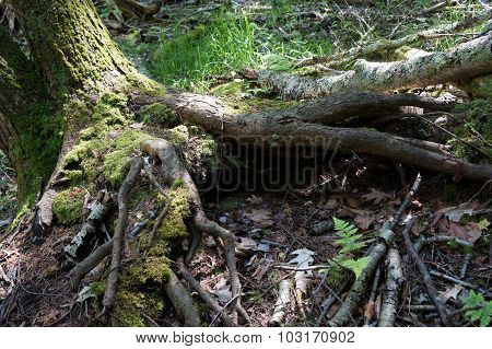 Moss on Exposed Tree Roots