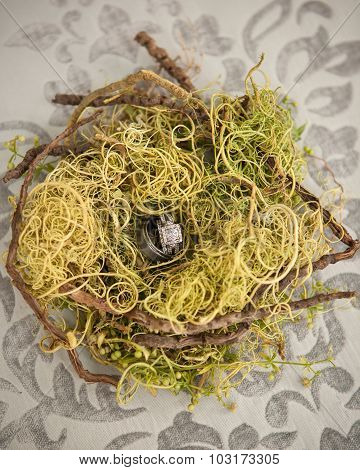 wedding rings in a birds nest