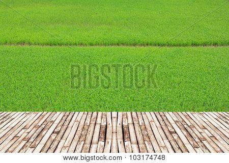 Rice Fields And Bamboo Bridge