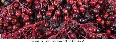 Bunch Of Fresh Elderberry As Background, Healthy Food
