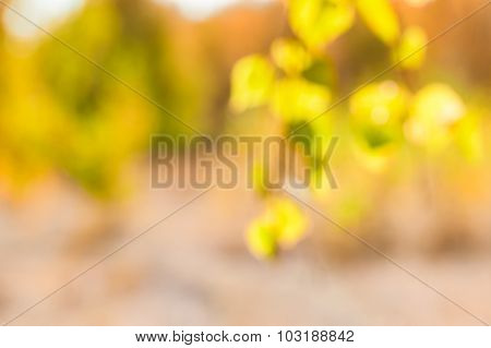 Blurred Autumn Background With Yellow And Green Trees