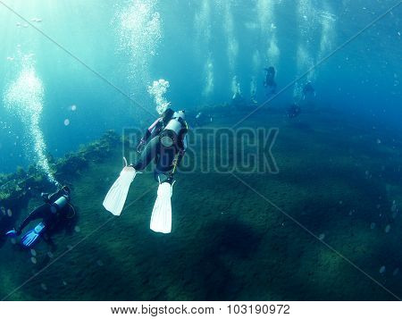 Scuba Diver With Coral