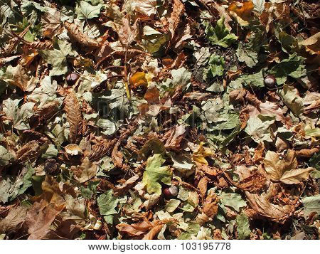Top View Of The Green And Brown Fallen Leaves Of Maple And Chestnut