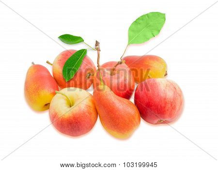 Several European Pears And Red Apple On A Light Background