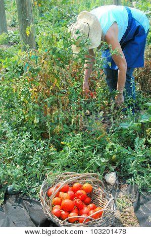 Female gardener.