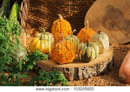 Collection Of Colorful Pumpkins In A Rustic Interior