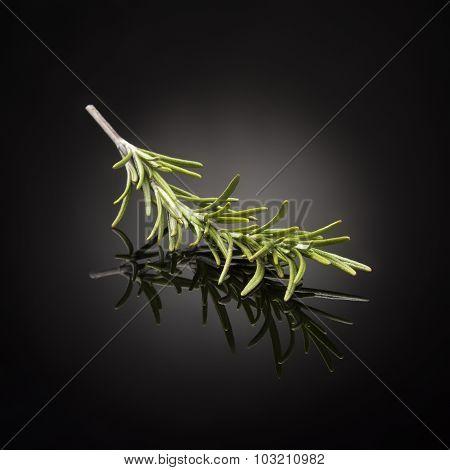 herb / rosemary on black