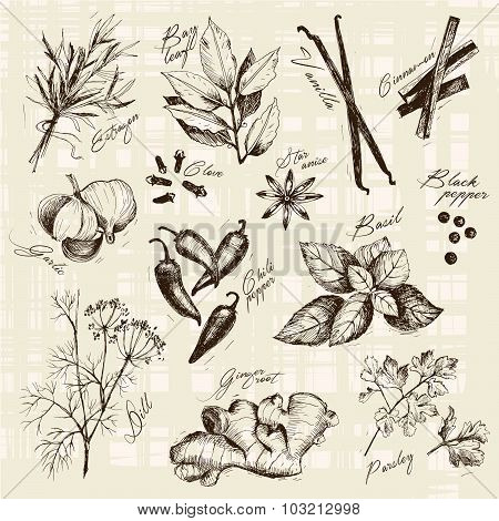 Vector collection of ink hand drawn spices and herb.