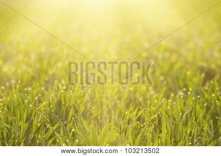 Green grass field background