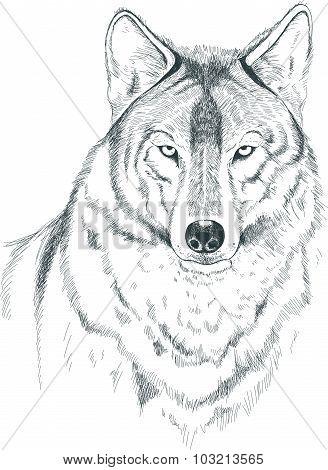 A sketch of a wolf. Handmade.