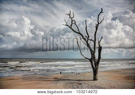 Oak trees submersed in sand at coast