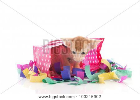 Birthday cat as present with confetti isolated over white background