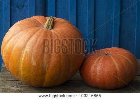 Two gourd close-up on wooden background after harvest