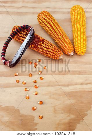 Dried Corn Cobs With Hand Tools To Clean The Grains Of Maize