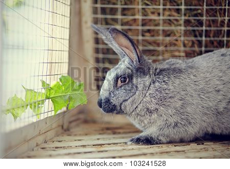 Gray Rabbit And Leaf Of A Dandelion.