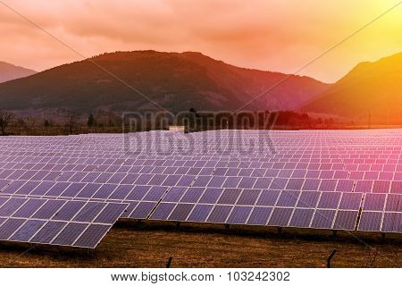 Powerplant Of Solar Panels At Sunset