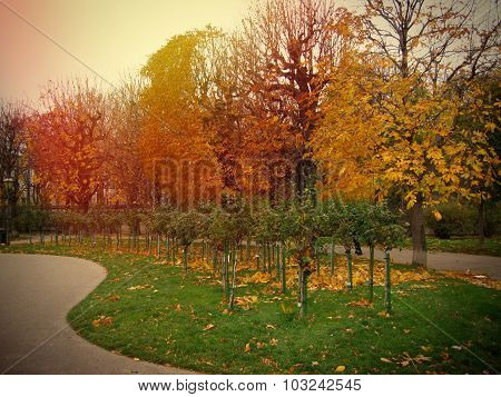 Autumn Trees, Fall Of The Leaves