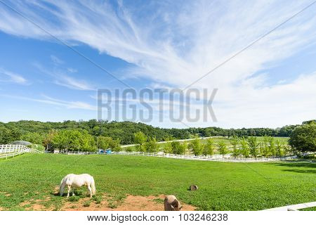 Goyang-si, Korea - July 16, 2015: Wondang Horse Ranch