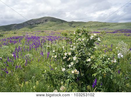 Wildflowers On A Background Of Mountains