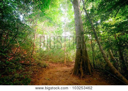 Fantasy Tropical Forest With Road Path Way. Thailand Nature