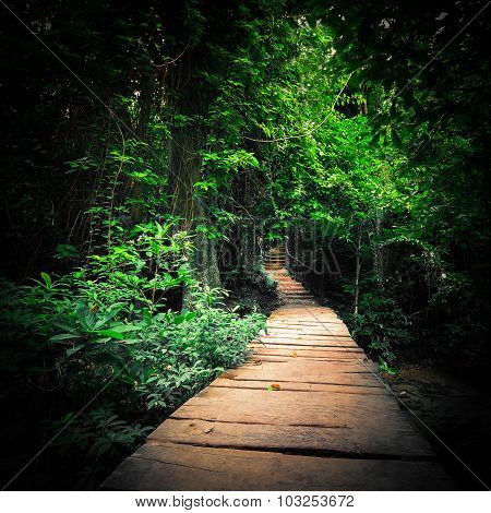 Fantasy Forest Iwith Path Way Through Tropical Trees