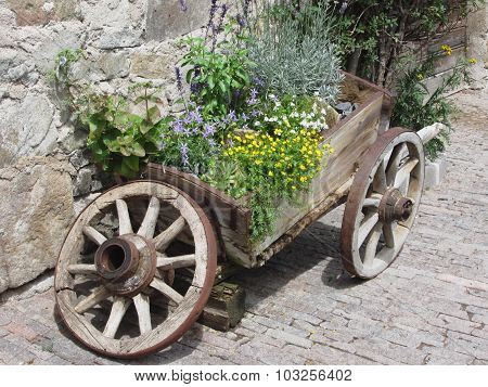 Vintage Garden Barrow With Wild Flowers And Herbs . Fie Allo Sciliar, South Tyrol, Italy