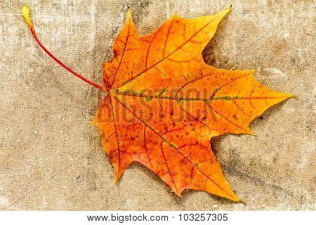 Autumnal  Leaf On Grunge Cloth Texture