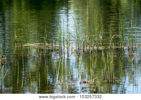 Wild Grass On Lake