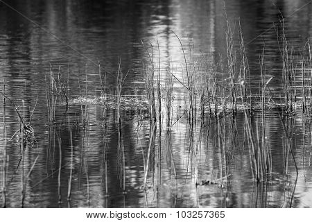 Wild Grass On Lake Of Monochrome Tone