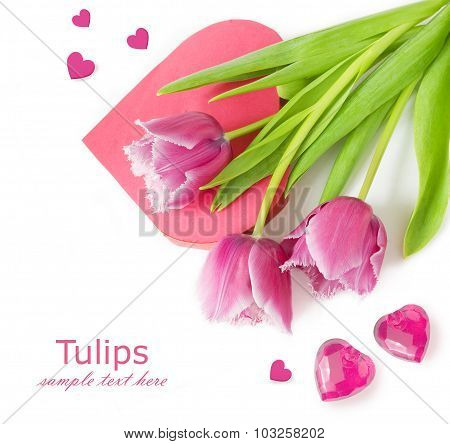 Pink tulips and heart box shape isolated on white background with sample text