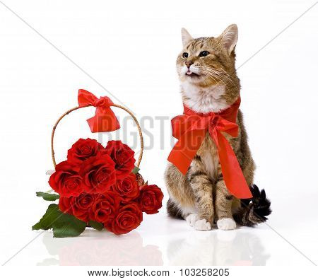 Cat with roses basket