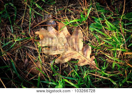 Autumn leaf on green grass