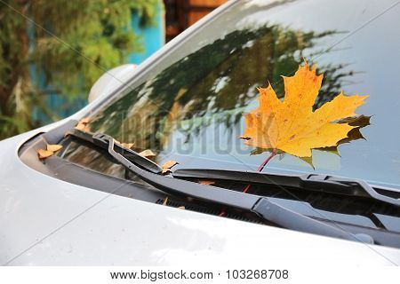 Yellow Maple Leaf Pressed By Wipers On Windshield Of Car