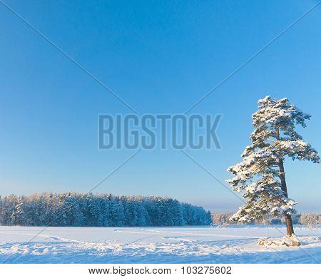 Sunny Glow Frozen Nature